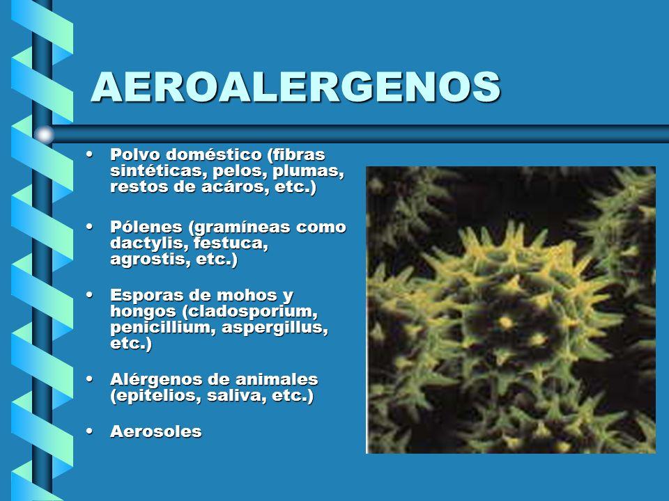 AEROALERGENOS Polvo doméstico (fibras sintéticas, pelos, plumas, restos de acáros, etc.)Polvo doméstico (fibras sintéticas, pelos, plumas, restos de a