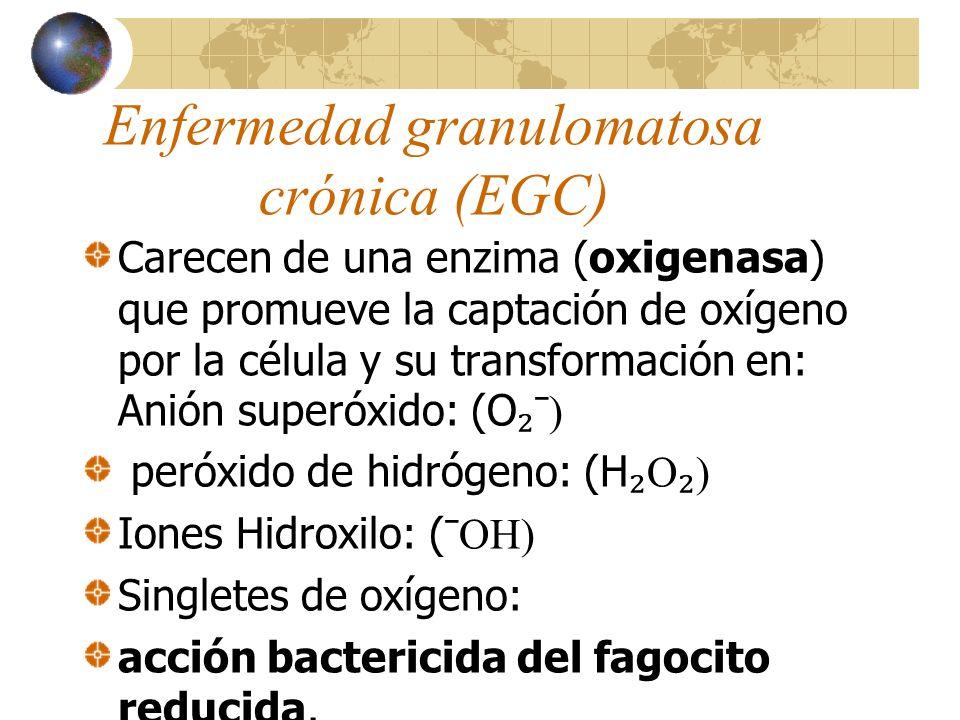 Deficiencia en la Glucosa-6- fosfato deshidrogenasa Defecto metabólico en el ciclo de las pentosas que reducen la generación de los metabolitos reactivos del oxígeno y de ésta manera su capacidad bactericida