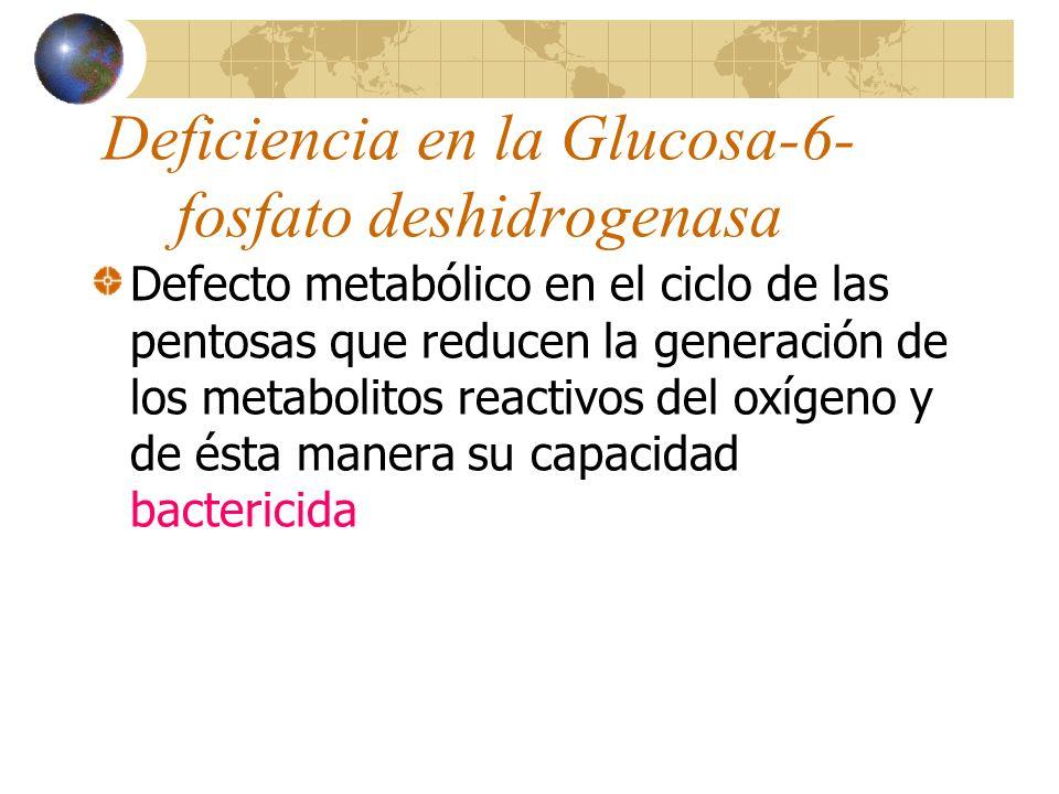 Deficiencia en la Glucosa-6- fosfato deshidrogenasa Defecto metabólico en el ciclo de las pentosas que reducen la generación de los metabolitos reacti