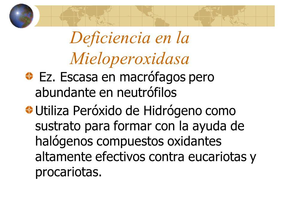 Deficiencia en la Mieloperoxidasa Ez. Escasa en macrófagos pero abundante en neutrófilos Utiliza Peróxido de Hidrógeno como sustrato para formar con l