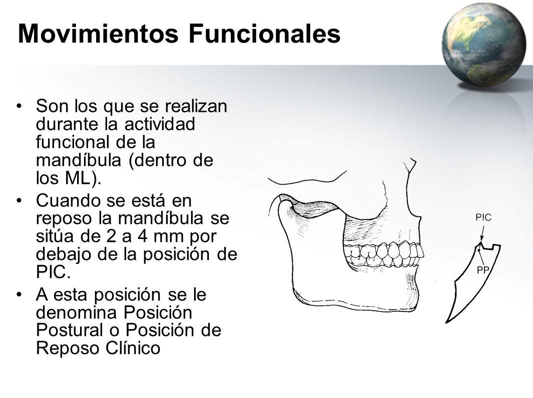 Movimientos Funcionales Son los que se realizan durante la actividad funcional de la mandíbula (dentro de los ML). Cuando se está en reposo la mandíbu