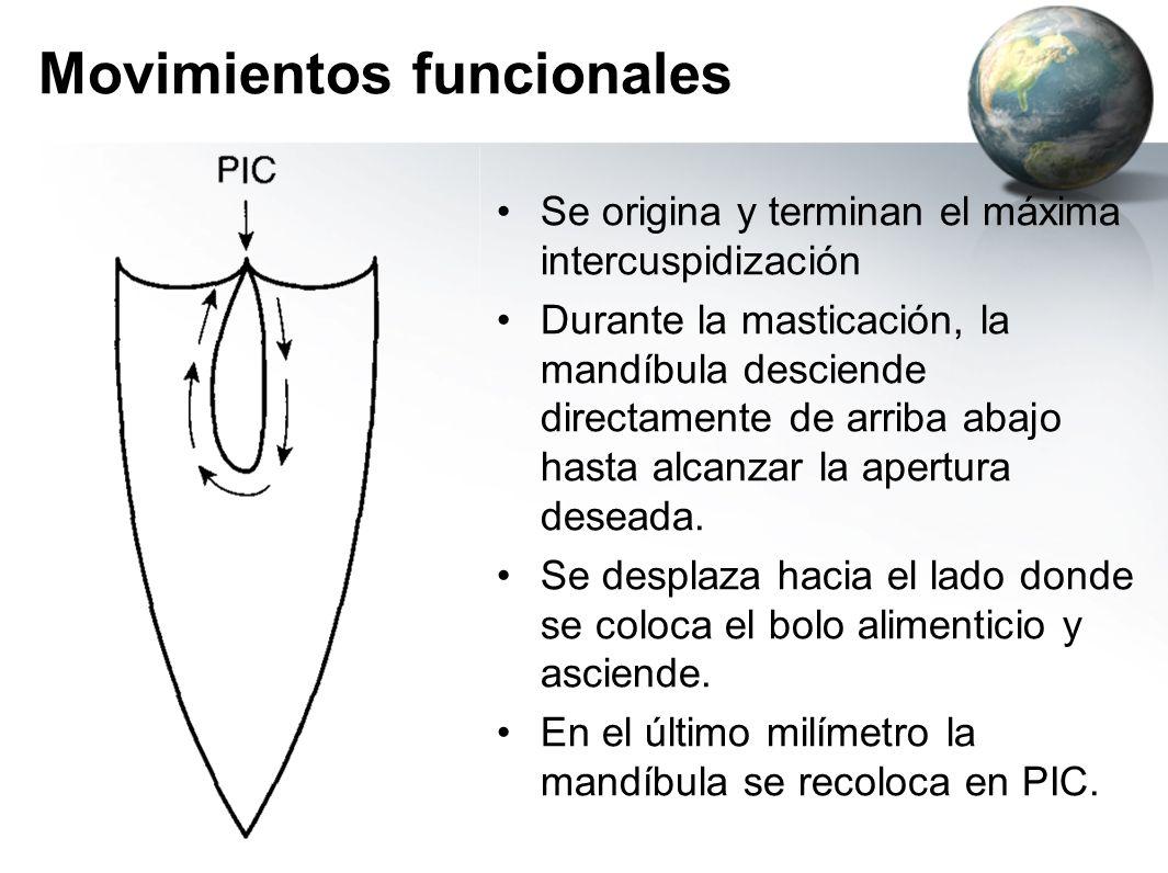 Movimientos funcionales Se origina y terminan el máxima intercuspidización Durante la masticación, la mandíbula desciende directamente de arriba abajo