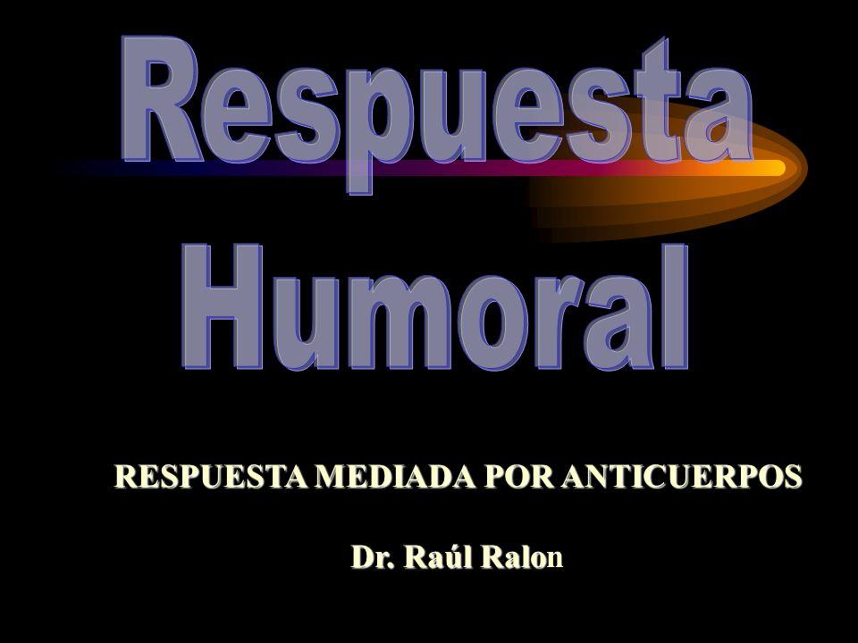 RESPUESTA MEDIADA POR ANTICUERPOS Dr. Raúl Ralo Dr. Raúl Ralon