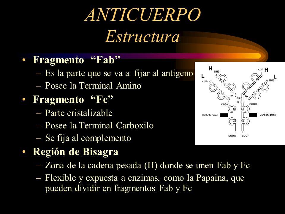 ANTICUERPO Estructura Fragmento Fab –Es la parte que se va a fijar al antígeno –Posee la Terminal Amino Fragmento Fc –Parte cristalizable –Posee la Te