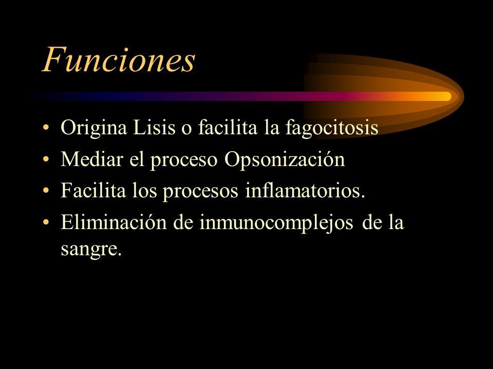 Funciones Origina Lisis o facilita la fagocitosis Mediar el proceso Opsonización Facilita los procesos inflamatorios. Eliminación de inmunocomplejos d