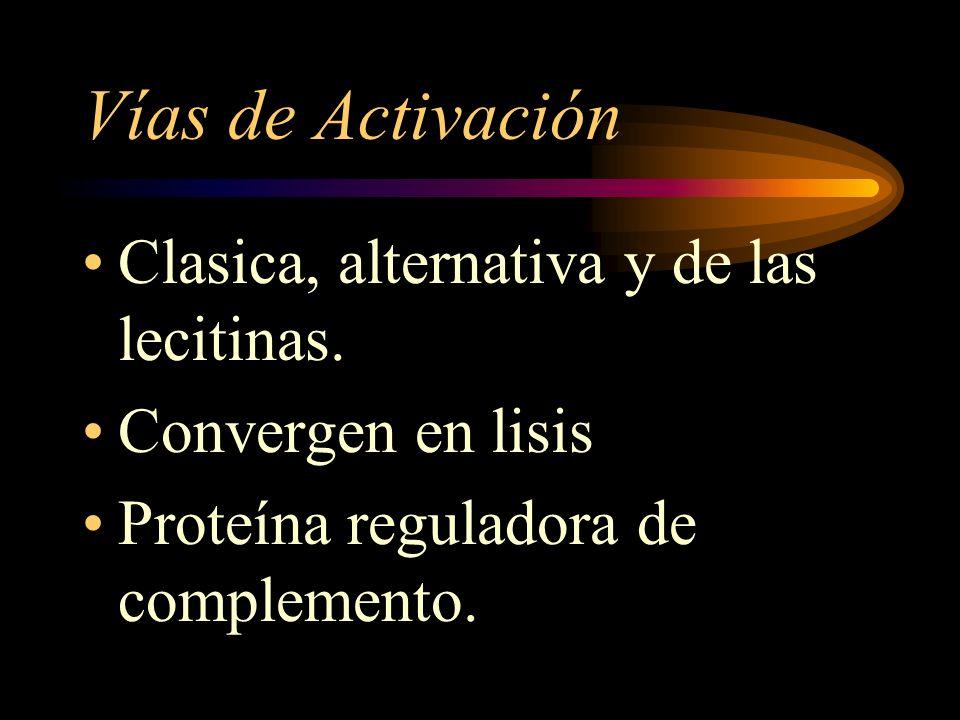 Vías de Activación Clasica, alternativa y de las lecitinas. Convergen en lisis Proteína reguladora de complemento.