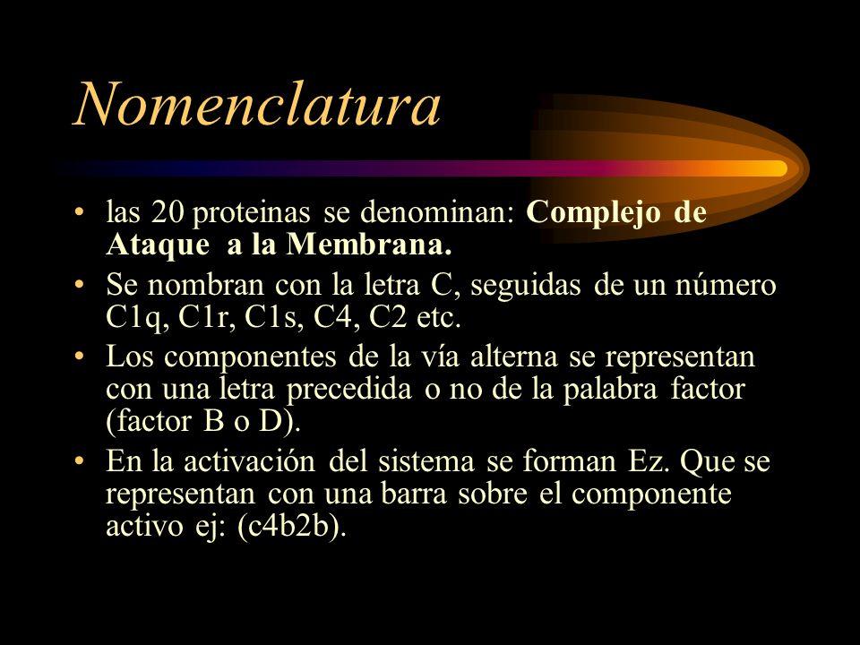 Nomenclatura las 20 proteinas se denominan: Complejo de Ataque a la Membrana. Se nombran con la letra C, seguidas de un número C1q, C1r, C1s, C4, C2 e