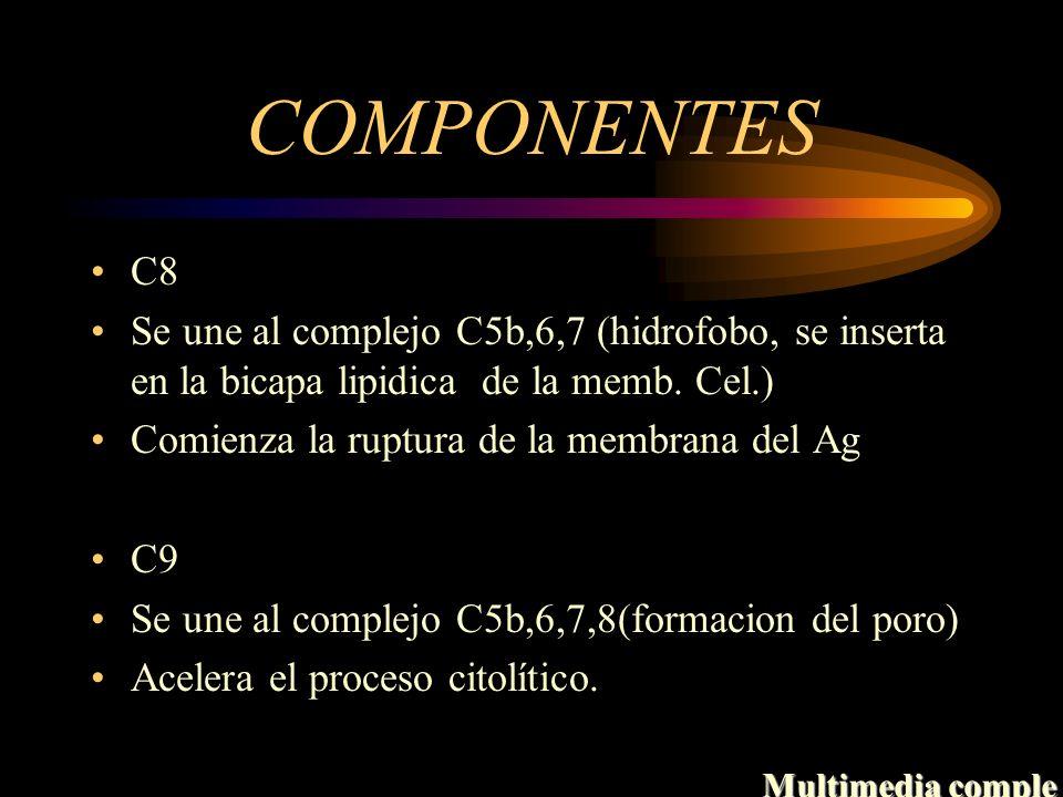 COMPONENTES C8 Se une al complejo C5b,6,7 (hidrofobo, se inserta en la bicapa lipidica de la memb. Cel.) Comienza la ruptura de la membrana del Ag C9