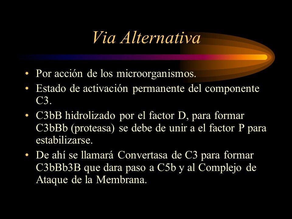 Via Alternativa Por acción de los microorganismos. Estado de activación permanente del componente C3. C3bB hidrolizado por el factor D, para formar C3