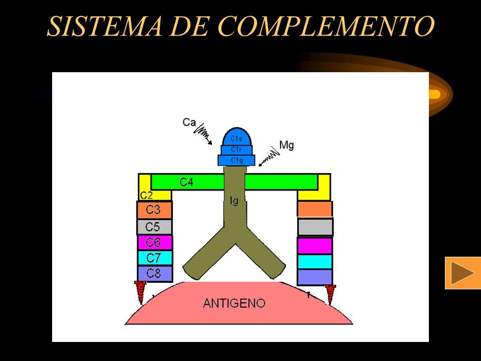 SISTEMA DE COMPLEMENTO