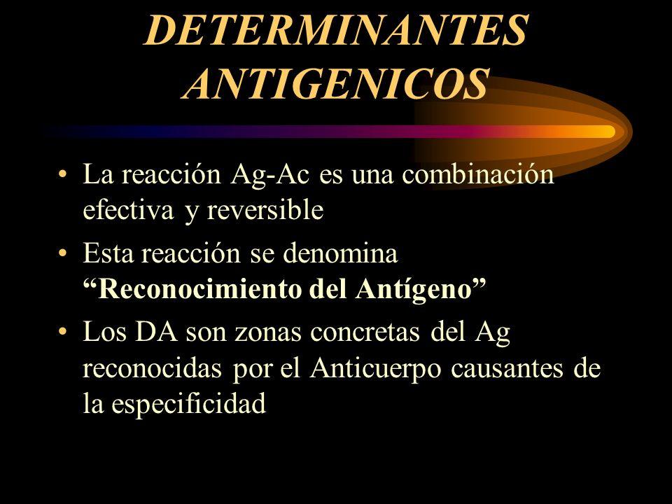 DETERMINANTES ANTIGENICOS La reacción Ag-Ac es una combinación efectiva y reversible Esta reacción se denomina Reconocimiento del Antígeno Los DA son