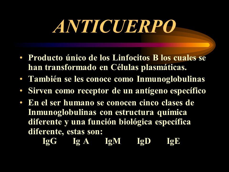 ANTICUERPO Producto único de los Linfocitos B los cuales se han transformado en Células plasmáticas. También se les conoce como Inmunoglobulinas Sirve