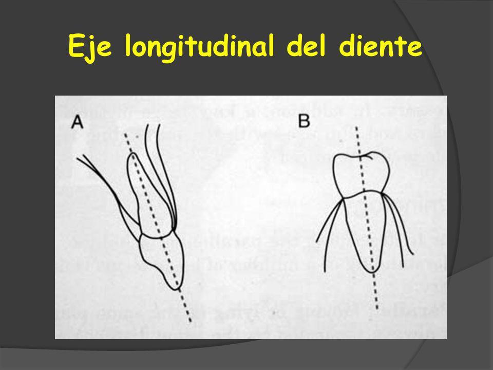 Eje longitudinal del diente