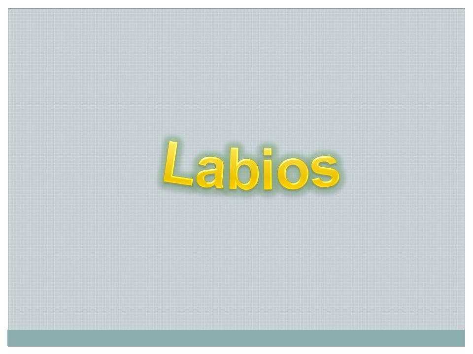 LÍNEA ALBA BUCAL PROMINENTE Se encuentra ubicada en la línea de oclusión y se observa de color blanquecino debido a la hiperqueratinización resultado