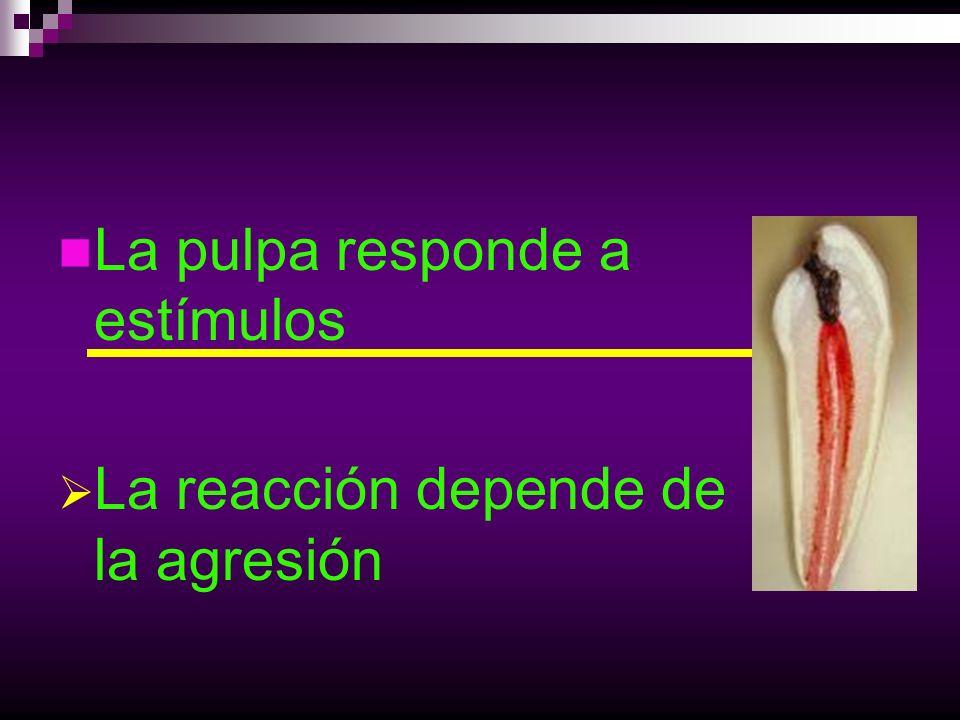 La pulpa responde a estímulos La reacción depende de la agresión