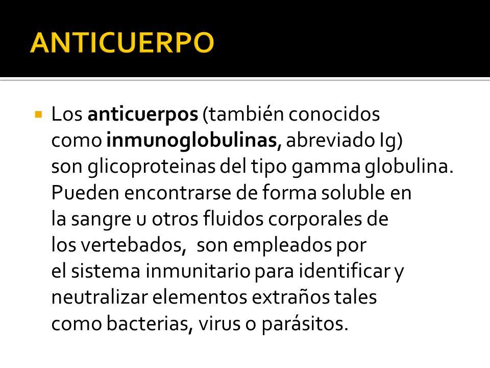 Los anticuerpos (también conocidos como inmunoglobulinas, abreviado Ig) son glicoproteinas del tipo gamma globulina.