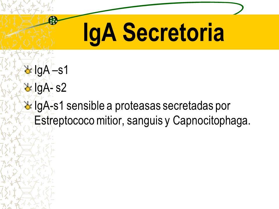 DOMINIO SALIVAL IgG en fragmentos IgA dimerica con componente secretor IgA producto de dos celulas distintas: IgA y cadena J producida por celulas pla
