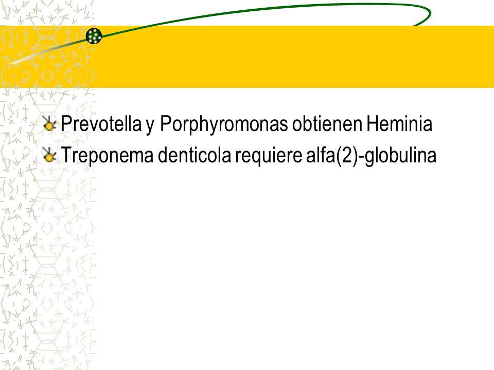 Surco Gingival Exudado gingival o crevicular Aumenta su secreción con la enf. (acción protectora por su flujo) Exudado: IgG, IgA, IgM, Cmp, nuetrófilo