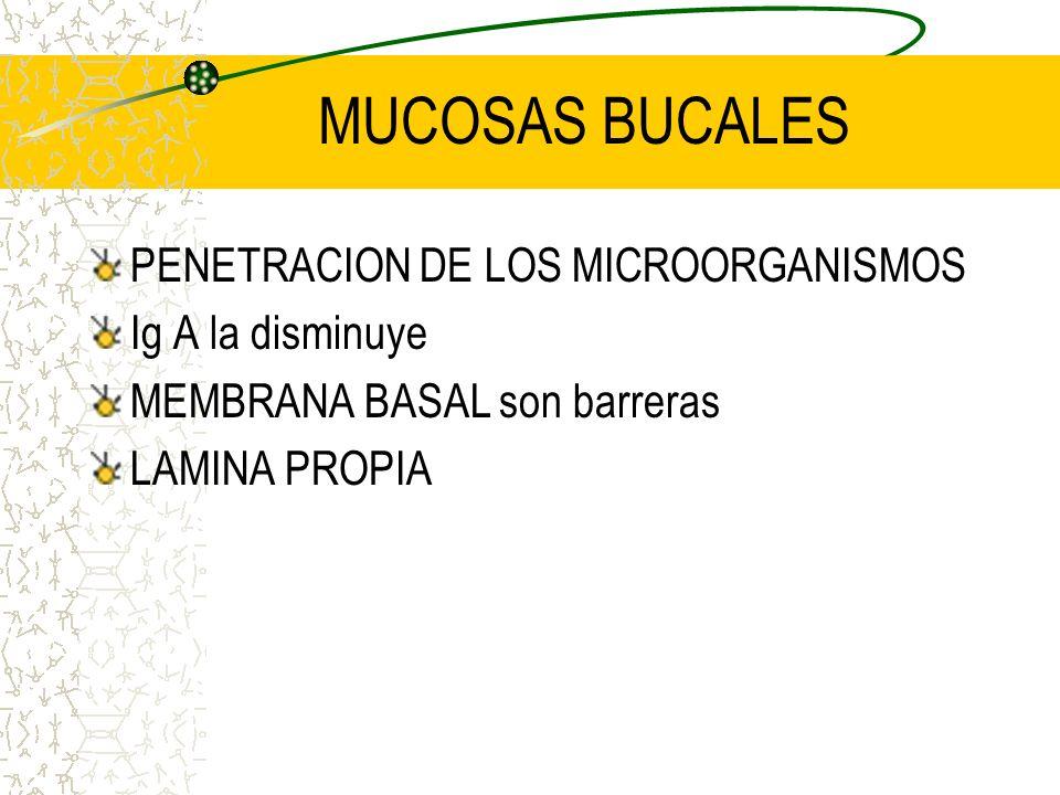 FACTORES DEL HOSPEDADOR MEMBRANAS MUCOSAS(integridad) TEJIDOS LINFOIDES ORALES SALIVA y EXUDADO (cantidad y calidad) ESPACIO GINGIVAL