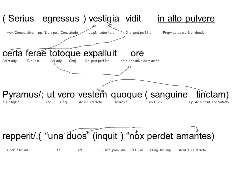 ( Serius egressus ) vestigia vidit in alto pulvere Adv. Comparativo pp. N. s. / part. Concertado ac.pl. neutro / c.d. 3 s. pret.perf.ind. Prep+ ab.s./