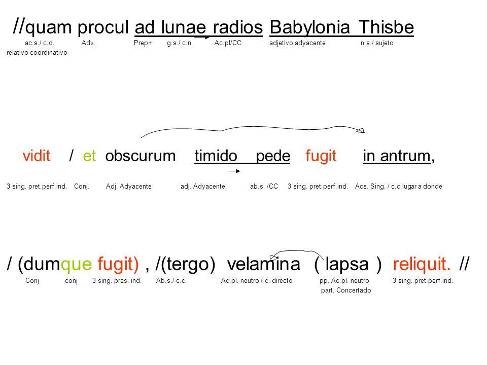 // quam procul ad lunae radios Babylonia Thisbe ac.s./ c.d. Adv. Prep+ g.s./ c.n. Ac.pl/CC adjetivo adyacente n.s./ sujeto relativo coordinativo vidit