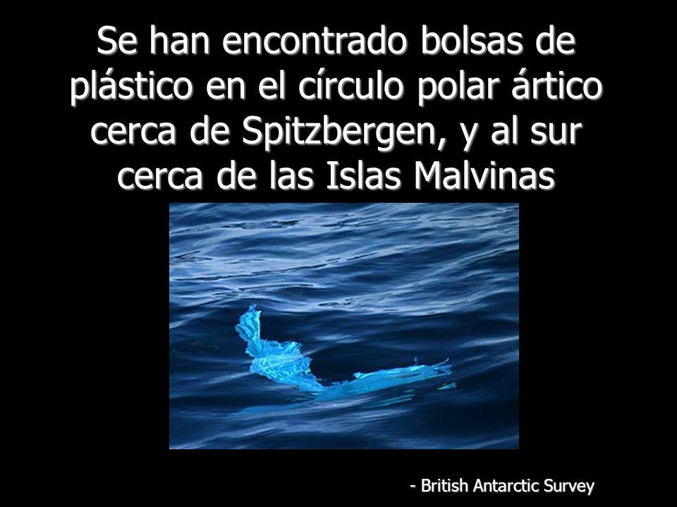 Se han encontrado bolsas de plástico en el círculo polar ártico cerca de Spitzbergen, y al sur cerca de las Islas Malvinas - British Antarctic Survey
