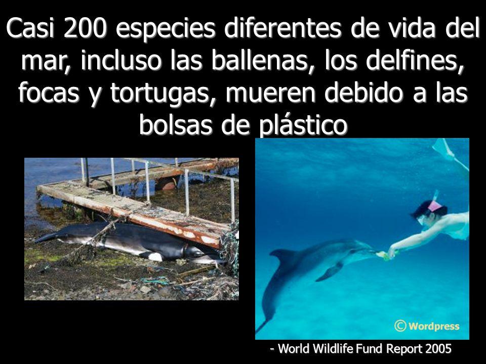 Casi 200 especies diferentes de vida del mar, incluso las ballenas, los delfines, focas y tortugas, mueren debido a las bolsas de plástico - World Wildlife Fund Report 2005
