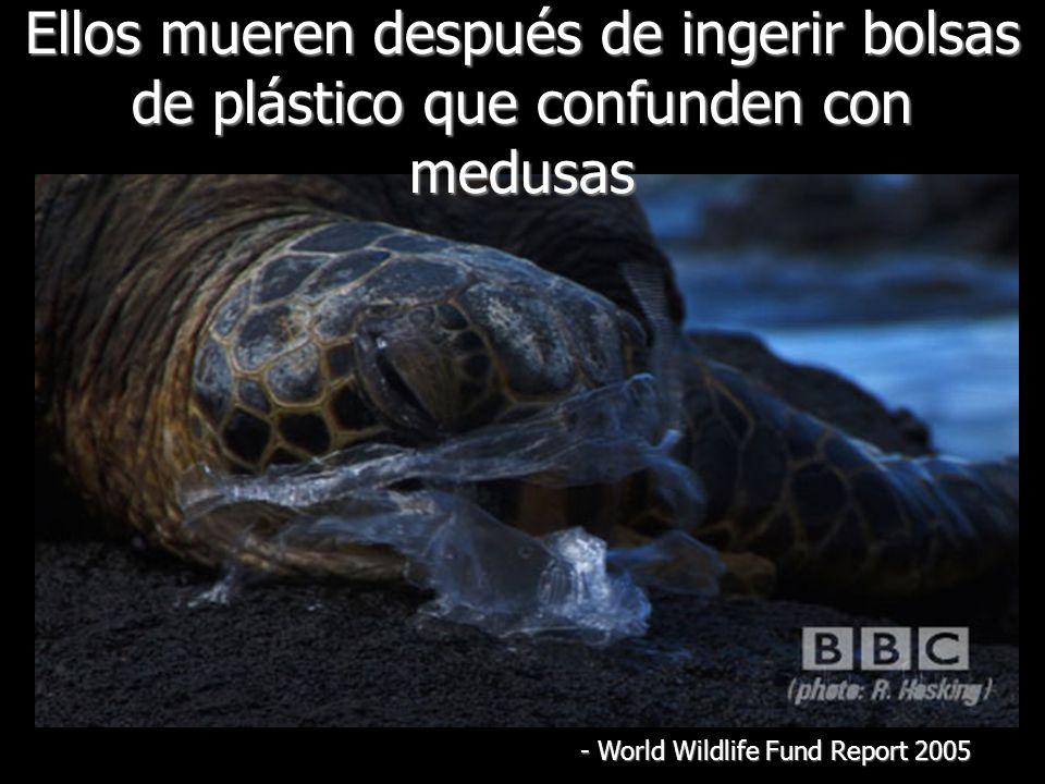 Ellos mueren después de ingerir bolsas de plástico que confunden con medusas - World Wildlife Fund Report 2005