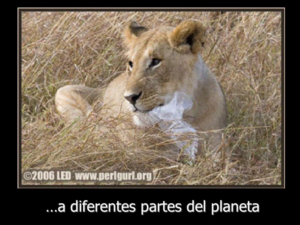…a diferentes partes del planeta