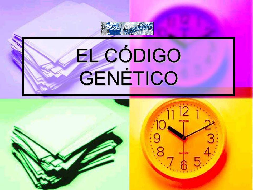 Pasos de la replicación del ADN 3.