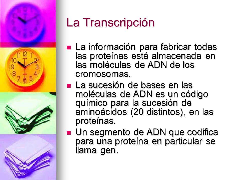 La Transcripción La información para fabricar todas las proteínas está almacenada en las moléculas de ADN de los cromosomas. La información para fabri