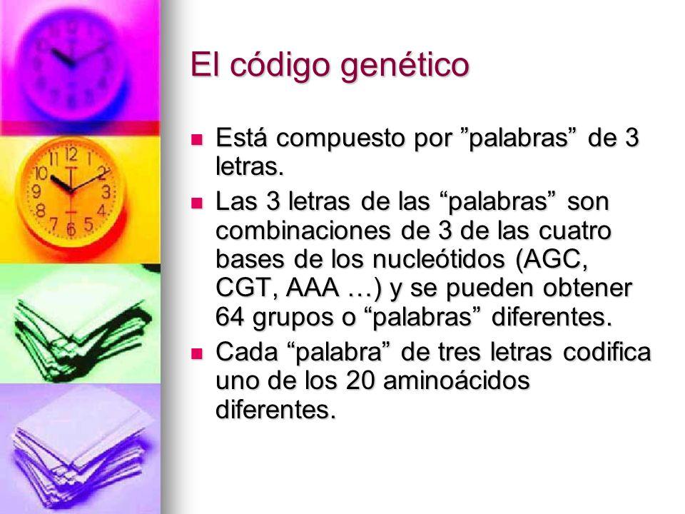 El código genético Está compuesto por palabras de 3 letras. Está compuesto por palabras de 3 letras. Las 3 letras de las palabras son combinaciones de