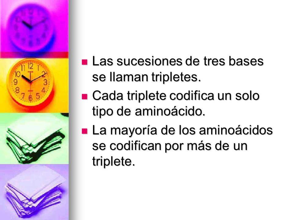 Las sucesiones de tres bases se llaman tripletes. Las sucesiones de tres bases se llaman tripletes. Cada triplete codifica un solo tipo de aminoácido.