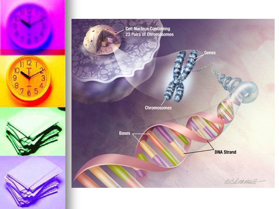 La síntesis de proteínas