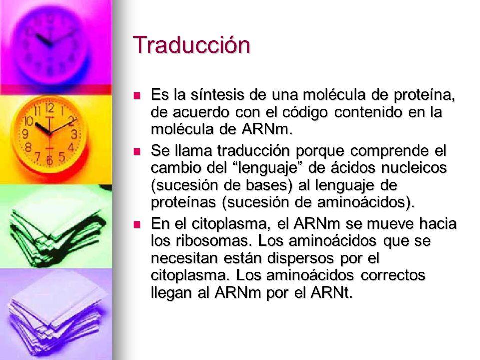 Traducción Es la síntesis de una molécula de proteína, de acuerdo con el código contenido en la molécula de ARNm. Es la síntesis de una molécula de pr