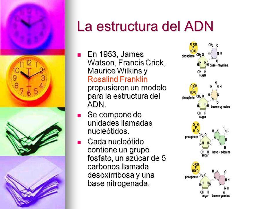 La estructura del ADN En 1953, James Watson, Francis Crick, Maurice Wilkins y Rosalind Franklin propusieron un modelo para la estructura del ADN. En 1