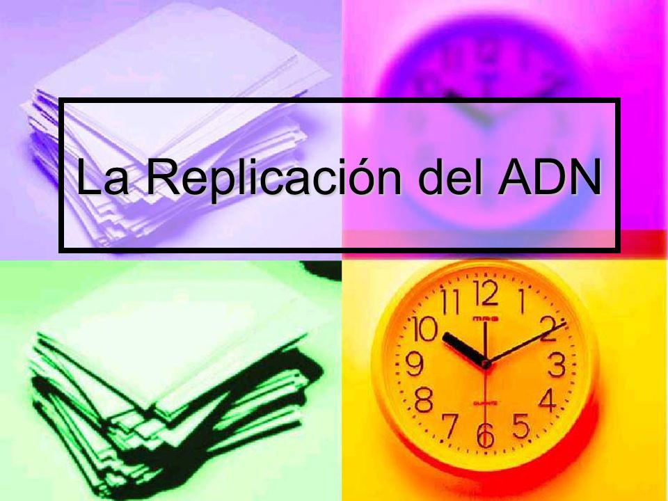 La Replicación del ADN