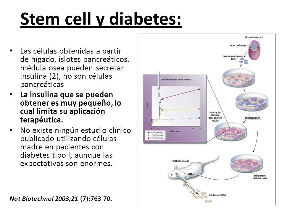 Stem cell y diabetes: Las células obtenidas a partir de hígado, islotes pancreáticos, médula ósea pueden secretar insulina (2), no son células pancreá
