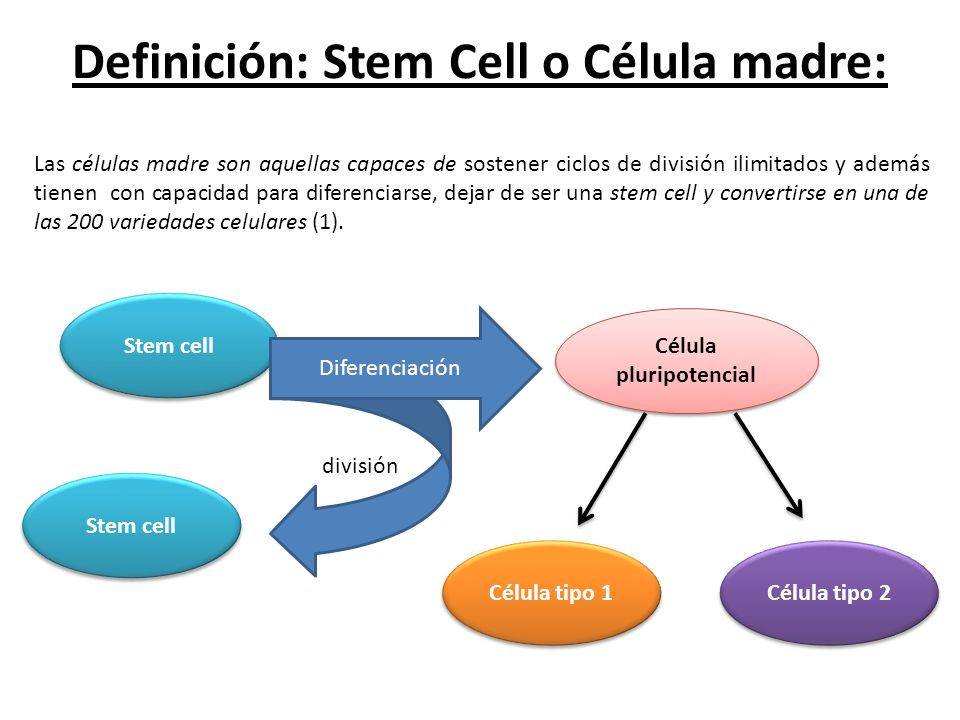 Definición: Stem Cell o Célula madre: Stem cell división Diferenciación Célula pluripotencial Stem cell Las células madre son aquellas capaces de sost
