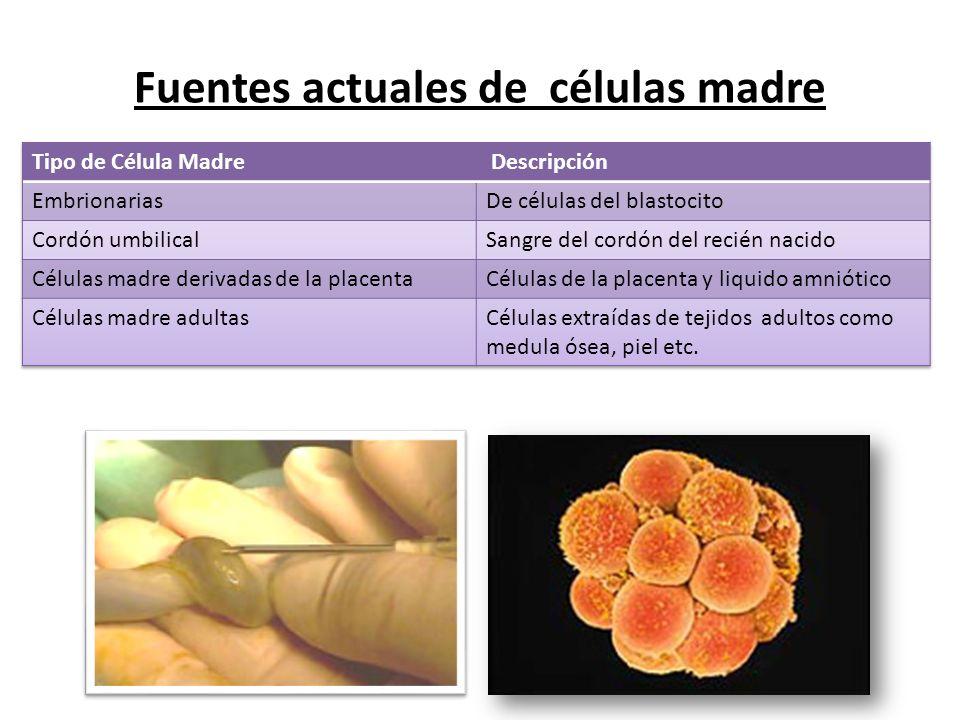 Fuentes actuales de células madre