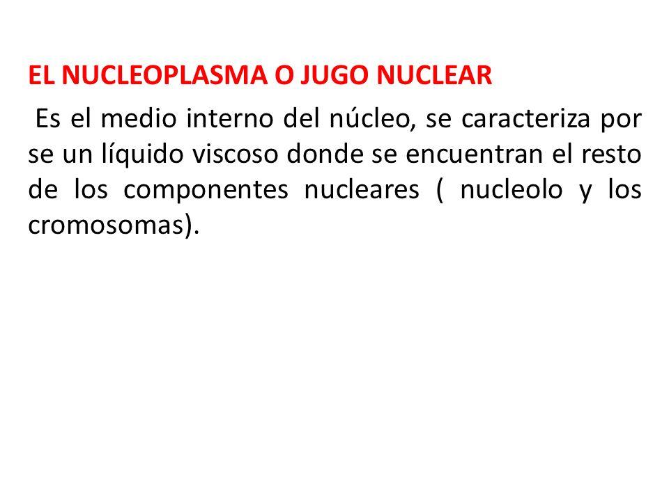 EL NUCLEOPLASMA O JUGO NUCLEAR Es el medio interno del núcleo, se caracteriza por se un líquido viscoso donde se encuentran el resto de los componente