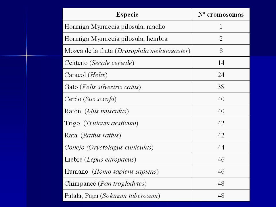 La denotación del cariotipo femenino es 46, XX.La denotación del cariotipo femenino es 46, XX.