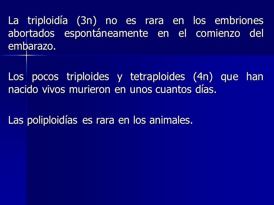 La triploidía (3n) no es rara en los embriones abortados espontáneamente en el comienzo del embarazo. Los pocos triploides y tetraploides (4n) que han