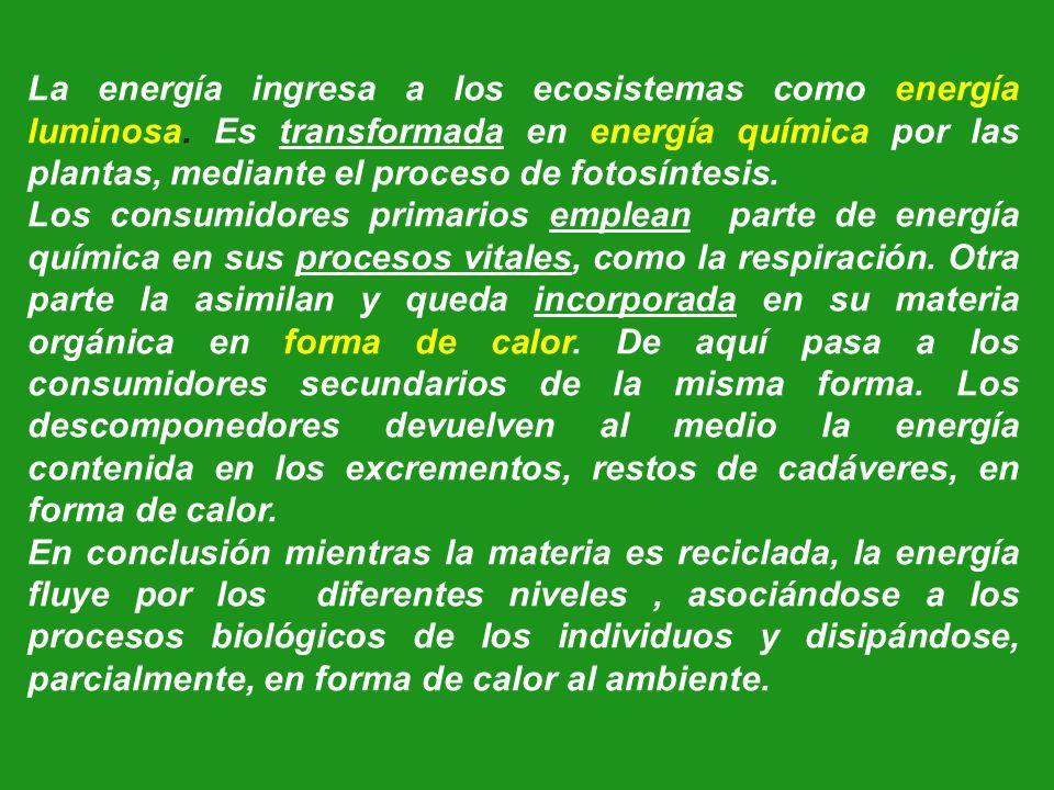 La energía ingresa a los ecosistemas como energía luminosa. Es transformada en energía química por las plantas, mediante el proceso de fotosíntesis. L