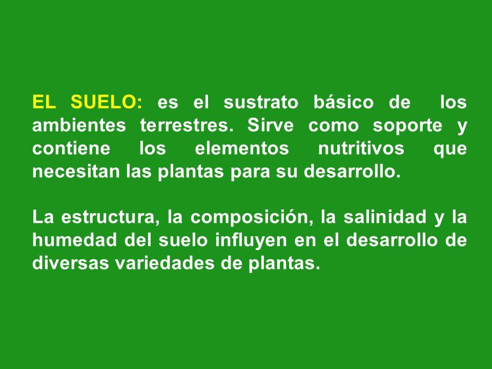 EL SUELO: es el sustrato básico de los ambientes terrestres. Sirve como soporte y contiene los elementos nutritivos que necesitan las plantas para su