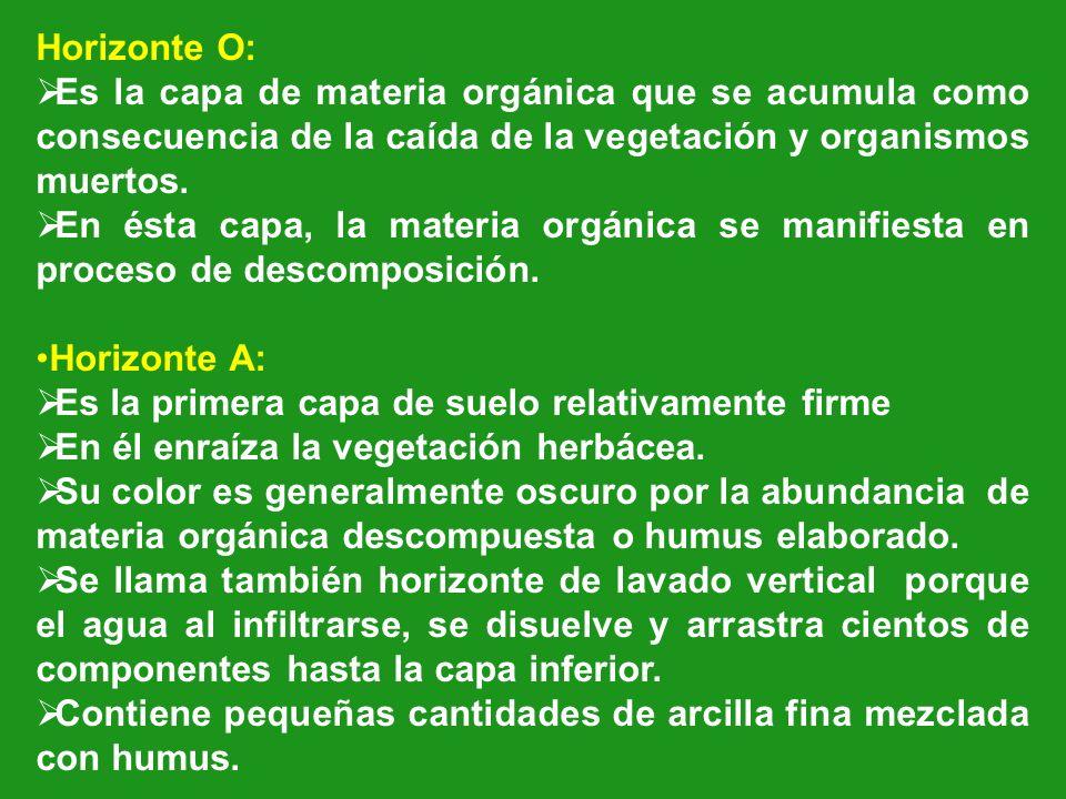 Horizonte O: Es la capa de materia orgánica que se acumula como consecuencia de la caída de la vegetación y organismos muertos. En ésta capa, la mater