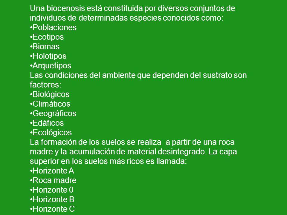 Una biocenosis está constituida por diversos conjuntos de individuos de determinadas especies conocidos como: Poblaciones Ecotipos Biomas Holotipos Ar
