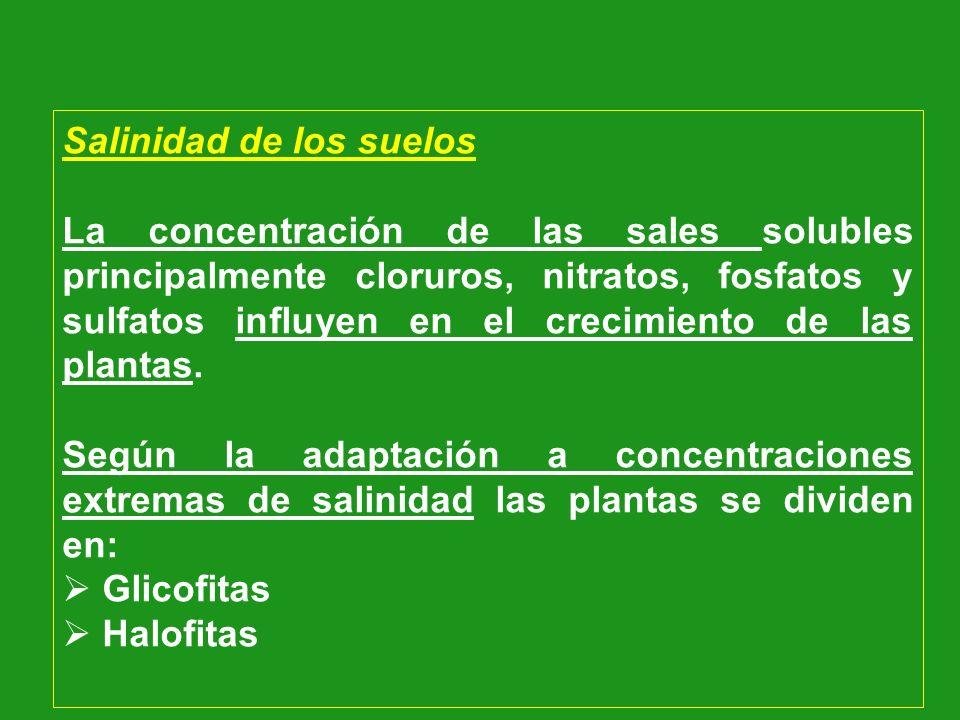 Salinidad de los suelos La concentración de las sales solubles principalmente cloruros, nitratos, fosfatos y sulfatos influyen en el crecimiento de la