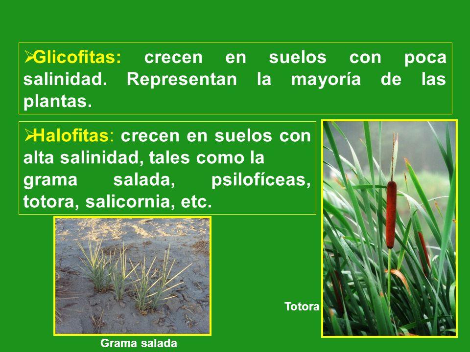 Glicofitas: crecen en suelos con poca salinidad. Representan la mayoría de las plantas. Halofitas: crecen en suelos con alta salinidad, tales como la