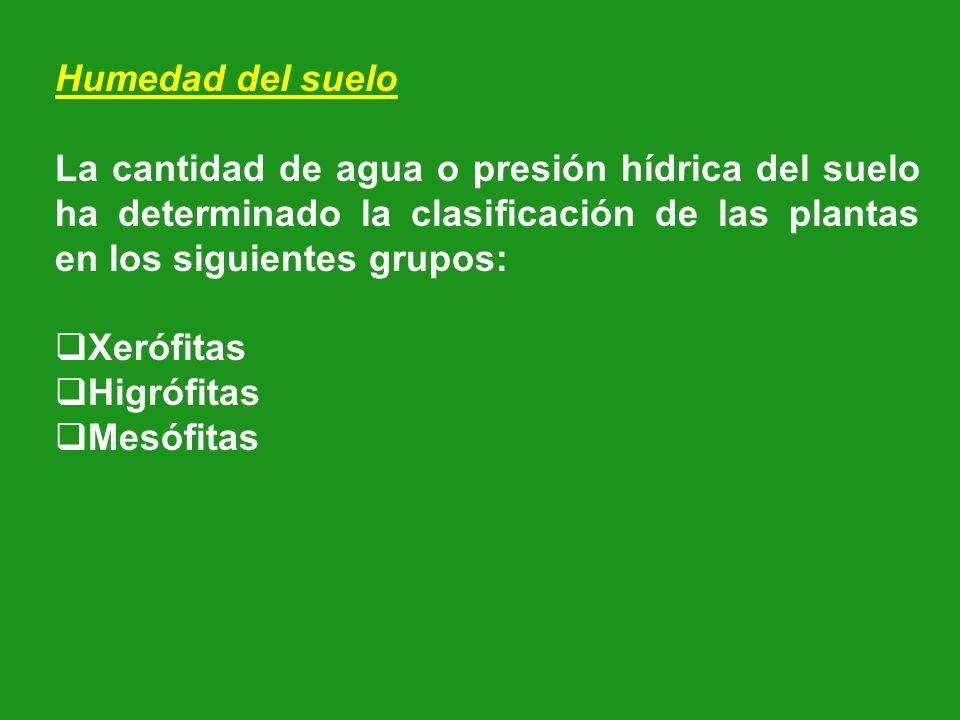 Humedad del suelo La cantidad de agua o presión hídrica del suelo ha determinado la clasificación de las plantas en los siguientes grupos: Xerófitas H